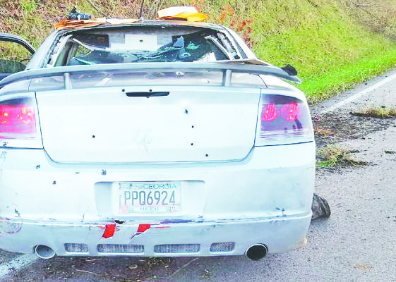 Wild chase ends at county line