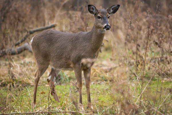 Illegal hunting leads to long list of charges